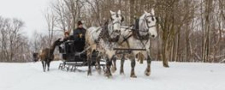 Sleigh Rides at Farm at Walnut Creek